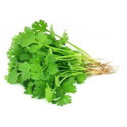Green Coriander 2Bunch